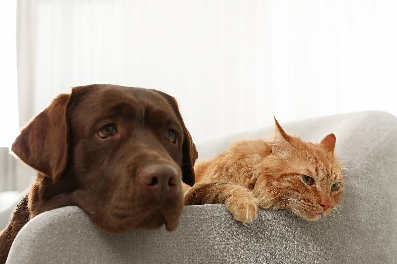 ノミ、マダニの予防をして猫、犬の健康を維持しよう!