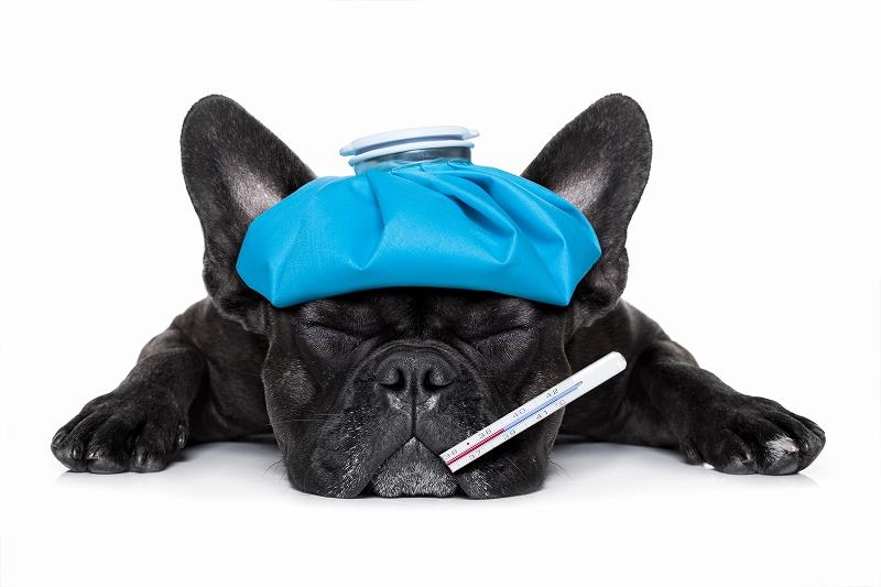 犬の歯周病治療の流れや治療後に飼い主が注意すべきことを解説します!
