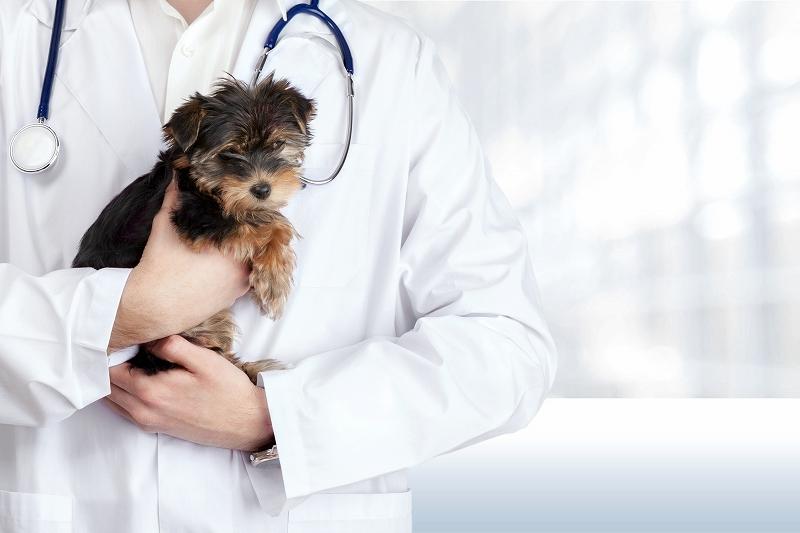 動物病院の歯科で適切な治療を受けるためのチェックポイント4つ