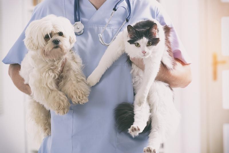 猫にも歯周病がある! 飼い主が予防できる4つのポイント