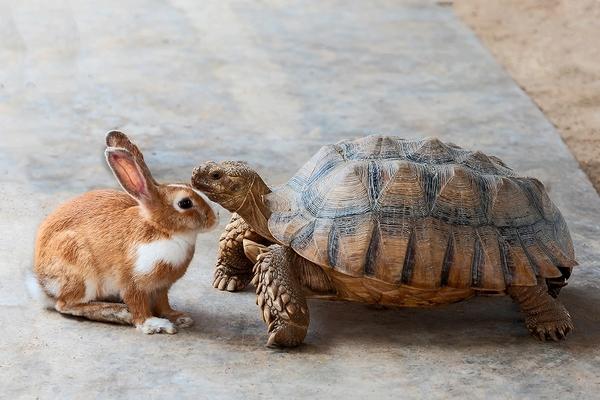 デリケートな小動物を動物病院で診察してもらうときの注意点とは?