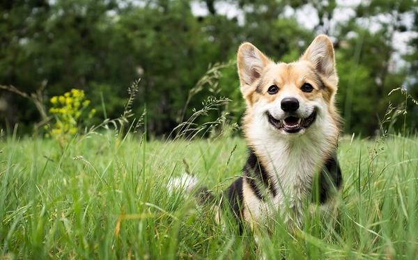 動物病院を受診する前に知っておきたい! ペット保険の基本を紹介
