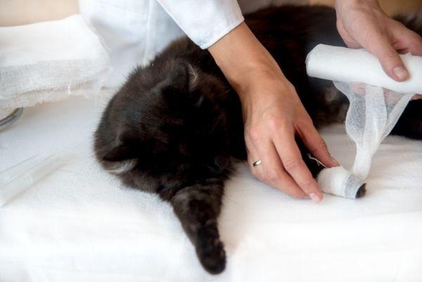 ペットが怪我をしたら!飼い主がすぐにできる応急処置法