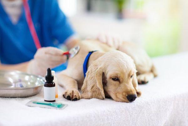ペットの病気を予防するためには?いつまでも健康でいてもらうために