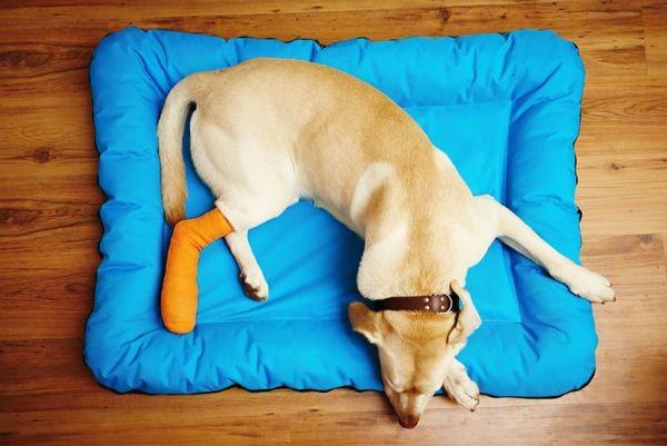 散歩中や外飼いのペットを怪我から守る方法を紹介