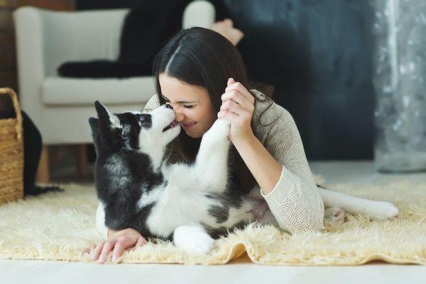 ペットの室内犬を飼い始める前に家庭内の怪我対策を施そう